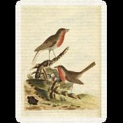 Collage 01_Bird-card 3