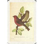 Collage 01_Bird- card 2