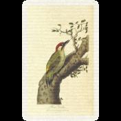 Collage 01_Bird- card 1