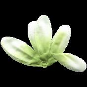 Jolly Neutral Mini Kit- Green Flower