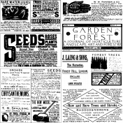 Paper Template 858- Ephemera