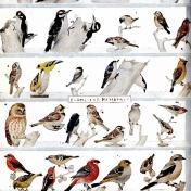 Birdhouse Paper 5