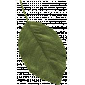 Birdhouse Element Leaf044