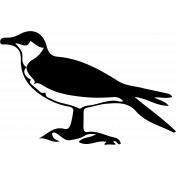 Bird 018 Graphic
