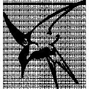 Bird 045 Graphic