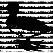 Bird 063 Graphic