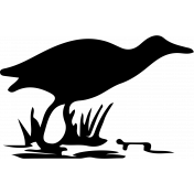 Bird 102 Graphic
