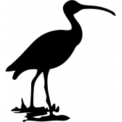 Bird 105 Graphic