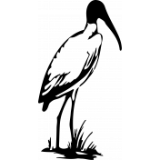 Bird 106 Graphic