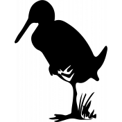 Bird 107 Graphic