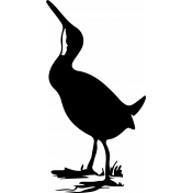 Bird 108 Graphic