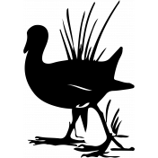 Bird 112 Graphic