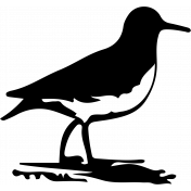 Bird 128 Graphic