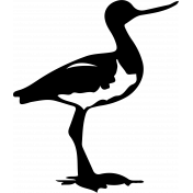 Bird 138 Graphic