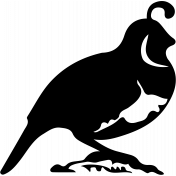 Bird 145 Graphic