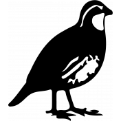 Bird 146 Graphic