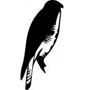 Bird 152 Graphic