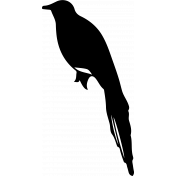 Bird 162 Graphic