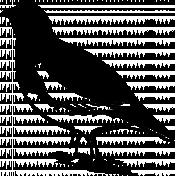 Bird 169 Graphic