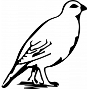 Bird 170 Graphic