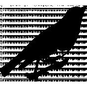 Bird 229 Graphic