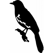 Bird 240 Graphic