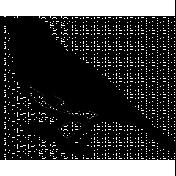 Bird 252 Graphic