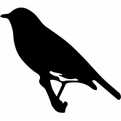 Bird 253 Graphic