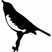 Bird 254 Graphic
