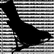 Bird 269 Graphic