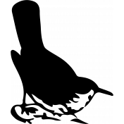 Bird 300 Graphic