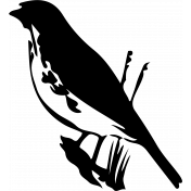 Bird 309 Graphic