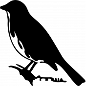 Bird 310 Graphic