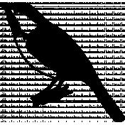 Bird 324 Graphic