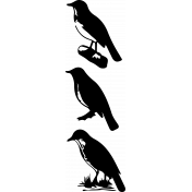 Bird 331 Graphic