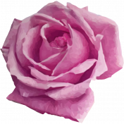 Be Bold Rose 1