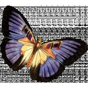 Presence Butterfly 16