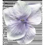 Presence Flower 066