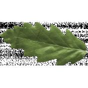 Scotland Leaf 2