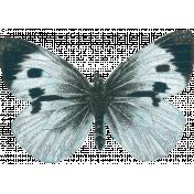 Fine Print Butterfly 13