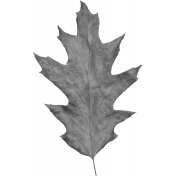 Leaves No.2- Templates- Leaf 12