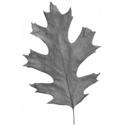 Leaves No.2- Templates- Leaf 14