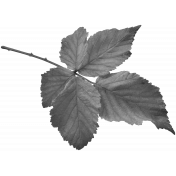 Leaves No.2- Templates- Leaf 18