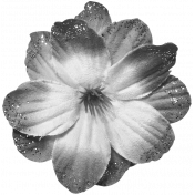 Flowers #02- Templates- Flower 13