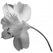 Flowers #01- Templates- Flower #6