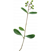 Secret Garden- Elements- Green Berry Branch
