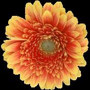 Good Life April - Minikit - Orange Flower