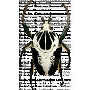 Gothical- Elements- Goliath Beetle