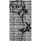 Drawn Flowers- Templates- Line Art Eschscholzia