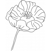 Drawn Flowers- Templates- Line Art Papaver
